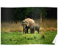 Elephant family - Learn care from the biggest land mammal Poster