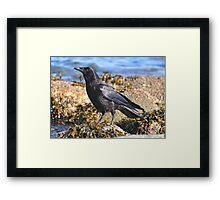 Shoreline Denizen - Sunshine Coast Framed Print