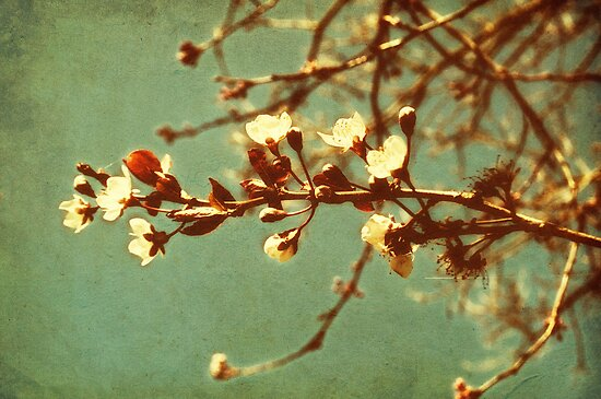 Blossoming by Citizen