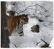 On the Prowl 2, The snow of Minnesota zoo Poster