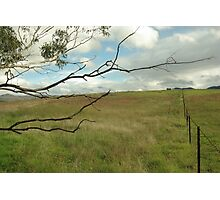 Out and about, in the paddocks near Tidbinbilla Photographic Print