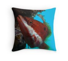 Red Banded Wrasse (Pseudolabrus biserialis) Throw Pillow