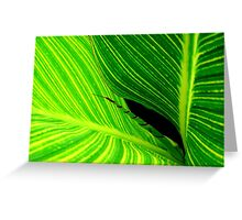 Leaf Lines Greeting Card