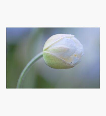 Gentle Zen Photographic Print