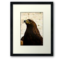 Golden Eagle #1 Framed Print