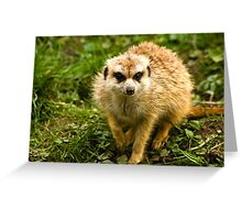 Meerkat #2 Greeting Card