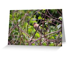 Perching Chaffinch Male Greeting Card
