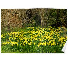 Yellow Trumpets Poster