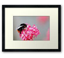 Busy Bee 2 Framed Print