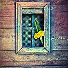Yellow flowers on door by Silvia Ganora