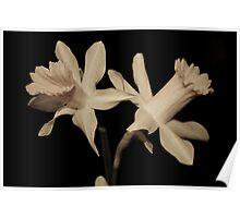 Daffodils Fine Art Poster
