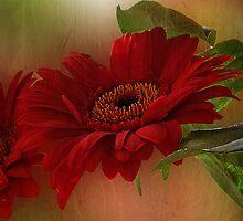 ~ Red Gerbera ~ by Brenda Boisvert
