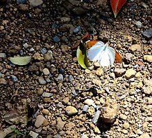 Wing Beat of a Butterfly - Thakhek, Laos. by Tiffany Lenoir