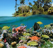 Tropical island and colorful underwater marin life by Dam - www.seaphotoart.com