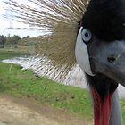 Bird 'gan eden' - Ramat Gan zoo, Israel by moensel