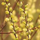 Fuzzy Yellow Blur by lorilee