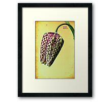 Fritillaria meleagris Framed Print