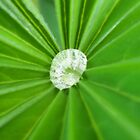 Diamond In The Green by Charlotte Stevens