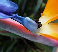 Bee and Paradise Bird  by Guy Tschiderer