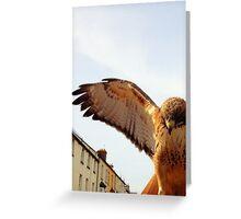Bird of Prey 3 Greeting Card