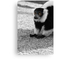 Lemar at Dudley Canvas Print