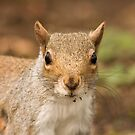 Grey squirrel juvenile by Jon Lees