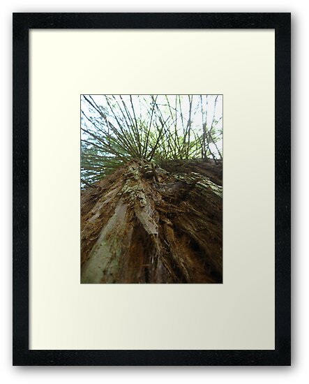 Giant Redwood Tree by GnomePrints