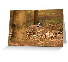 European Jay Greeting Card