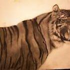 TIGER DRAWING by danwick