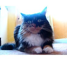 My Best (furry feline) Girl Photographic Print