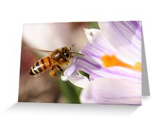 Busy Bee Greeting Card