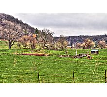Lonely Pasture Photographic Print