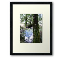 Tree, moss and mountain reflection Framed Print