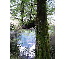 Tree, moss and mountain reflection Photographic Print