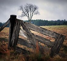 The Back Field by George's Photography