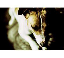 Coco Photographic Print