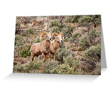 Big Horn Rams 2 Greeting Card
