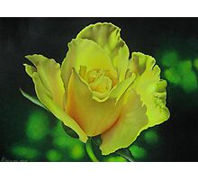 Yellow Rose - Midas Touch Photographic Print