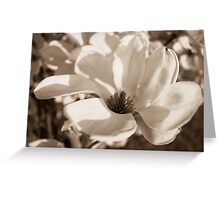 Black and White Tulip Tree Blossom Greeting Card