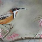 Eastern Spinebill by JulieWickham