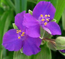 Purple Flowers by carol selchert