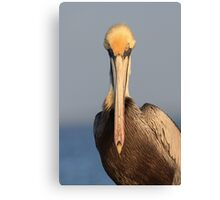 Pelican Attitude Canvas Print