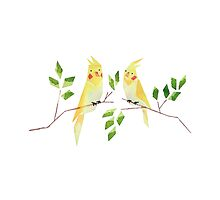 Low poly watercolor - cockatiels by scarriebarrie