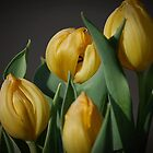 Yellow Tulips Flowers by Jonice