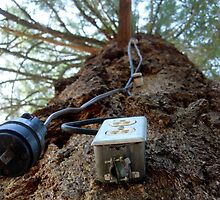 Outlet on a tree by Christopher Marcoux