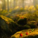 Magical forest by Veikko  Suikkanen