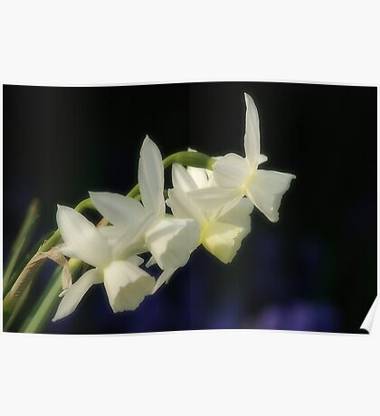 Vanilla Fragrance Poster