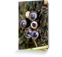 In a nesting mode Greeting Card