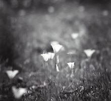 Untitled by Betty Schlueter
