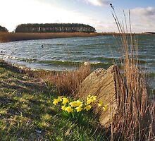 Spring in Dike Water by Adri  Padmos